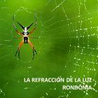 iGOR WEB